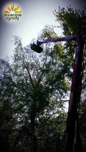 wycinka drzew Kraków