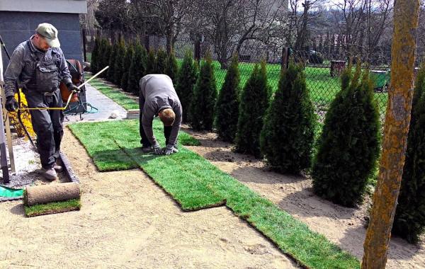 Trawnik z rolki w 3 dni