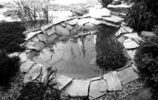 Renowacja oczka wodnego